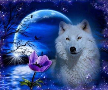 Diamond Painting Wolf 30x25cm